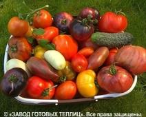 отзыв от покупателя теплицы ЗАВОДА ГОТОВЫХ ТЕПЛИЦ (Мария. г. Москва)