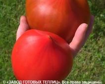отзыв от покупателя теплицы ЗАВОДА ГОТОВЫХ ТЕПЛИЦ (Елена. г. Тула)